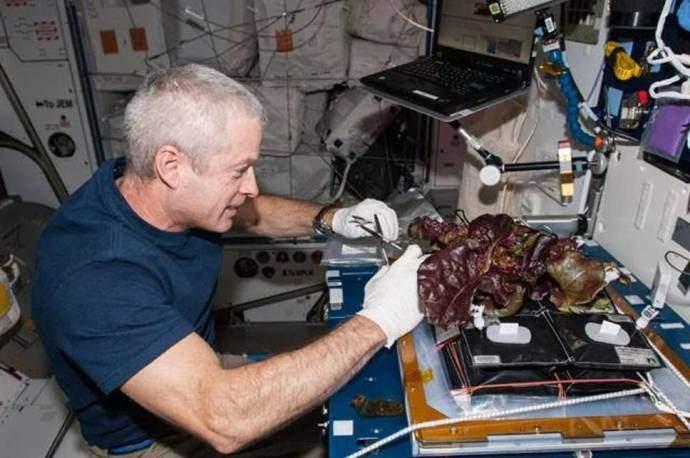 Uluslararası Uzay İstasyonu'nda marul yetiştirildi