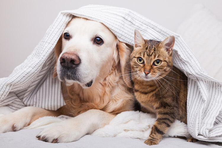 Evcil Hayvanlara Çip Takma